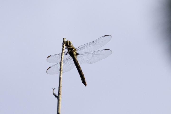 backyard-wonder-x-dragonfly.jpg