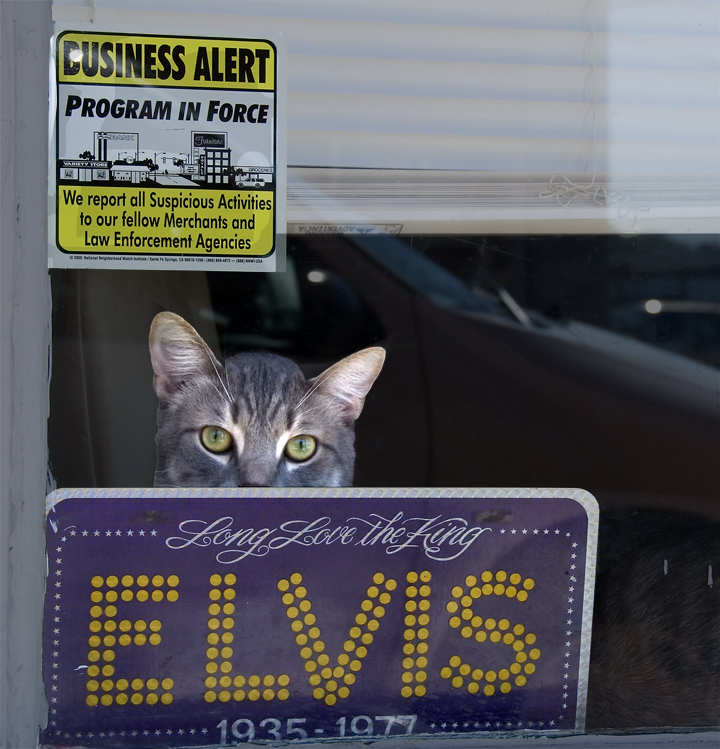 dsc_2321-cat-and-elvis.jpg