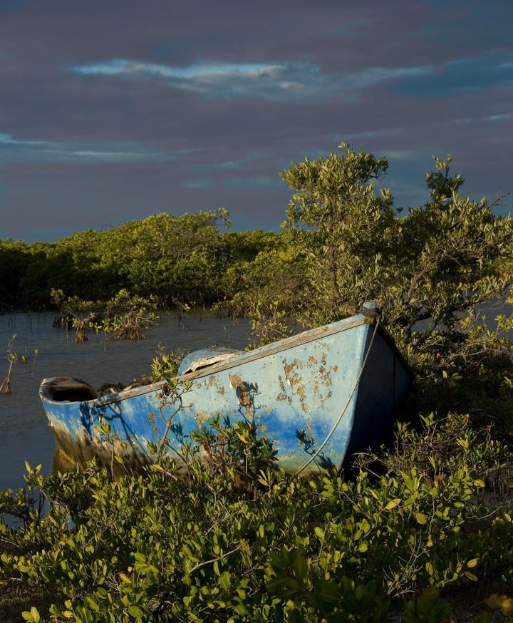 dsc_2815-blue-boat-in-bushe.jpg