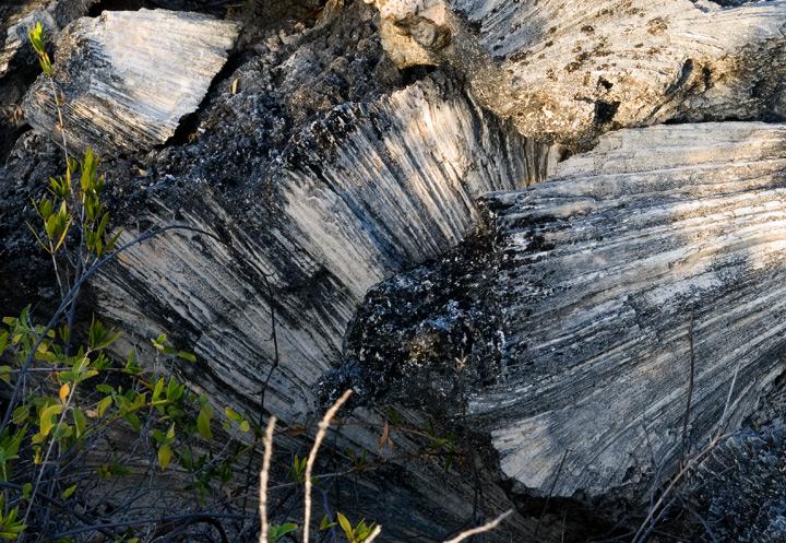 dsc_4525-petrified-rock.jpg