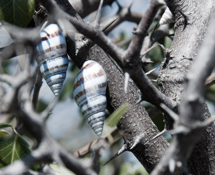 dsc_4995-snails.jpg