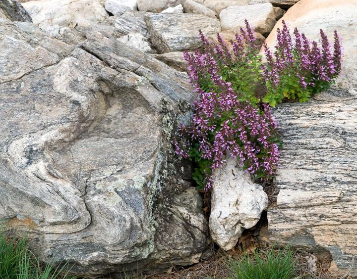 dsc_6397-rocks-and-flowers.jpg