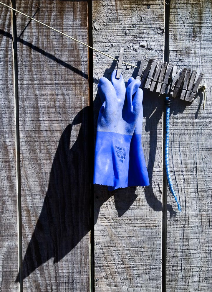 """While wandering around Leslie and Beaver's yard, George saw these blue gloves sending their message in the shadow.  But I am particulary drawn to the wonderful smooth blue against that weathered gray wall.  Aren't the clothespins perfect for this shot?  They are such handy little aids, and yet nearly obsolete.  Yet when I see I line of laundry, I am somehow comforted, despite what the condo rules might dictate.""  --RM--"