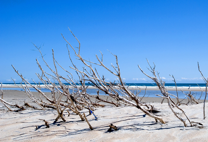 """""""The feeling here is really winter at the beach.  Stark, up against the wind, and beautifully desolate.  Kind of reminds me of snow storms covering the bushes up north.""""  --RM--"""