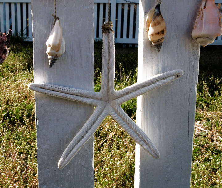 """A sweet little shell ornament hanging on a fence.  All over Ocracoke you can spy all sorts of decoration with shells. In some places it resembles gris-gris, in others rain chains. You will undoubtedly find shells in every home in town, in bowls, on shelves, piled in the yard, used in ways to adorn and embellish with the pottery from the sea.""   --RM--"
