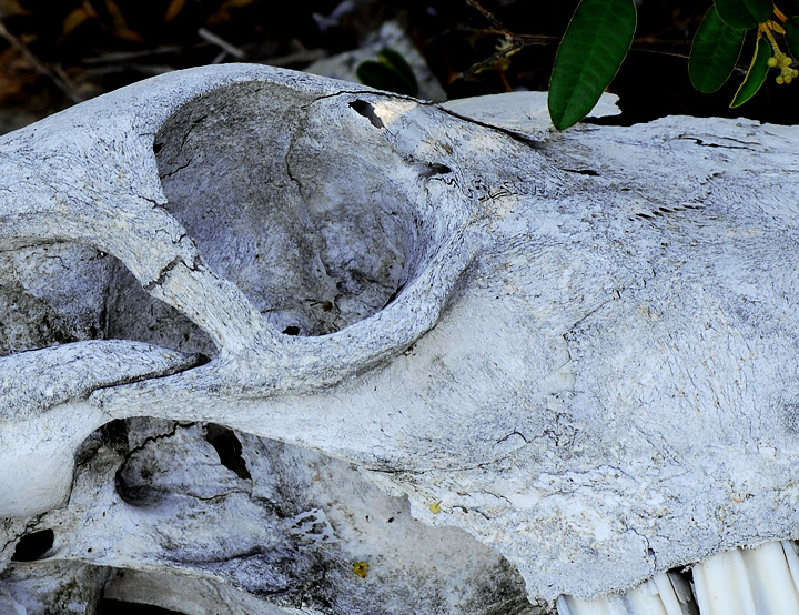 A skull that is starting to break down.  It looks like stone on its way back to the earth.  — RM —