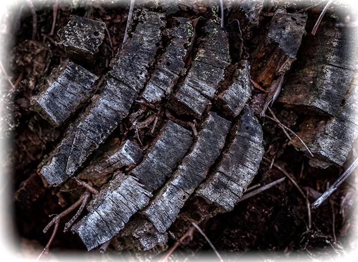 _DSC7982-tree-rings-tz