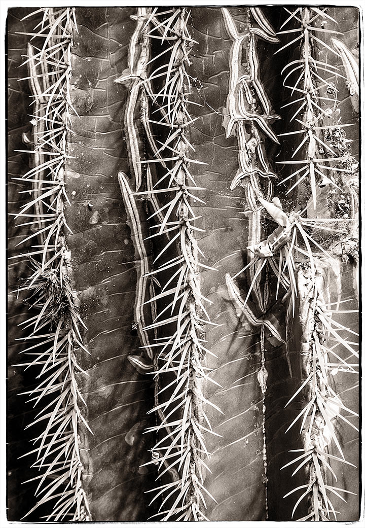 _DSC0185-worny-cactus-ppe