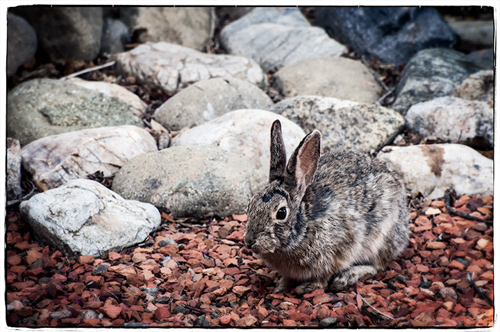 _DSC1145-rabbit-visitor-ppe