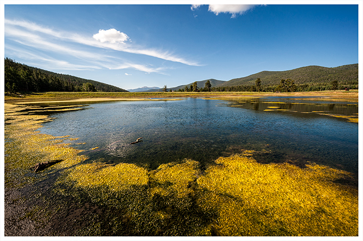 _DSC4355-shuree-pond-scum