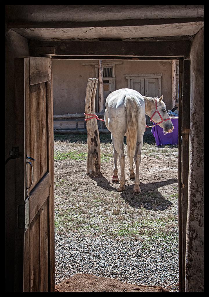 _DSC5793-horse-in-the-courtyard