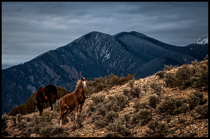_DSC0425-indian-ponies-grazing-and-looking