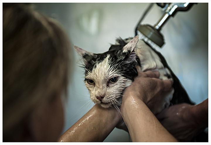 _DSC5372-cat-bath