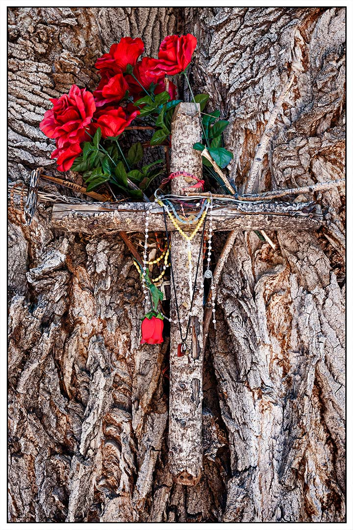 _DSC8688-roses-and-cross-in-tree-chimayo