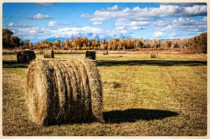 _DSC6322-hay-rolls-colorado