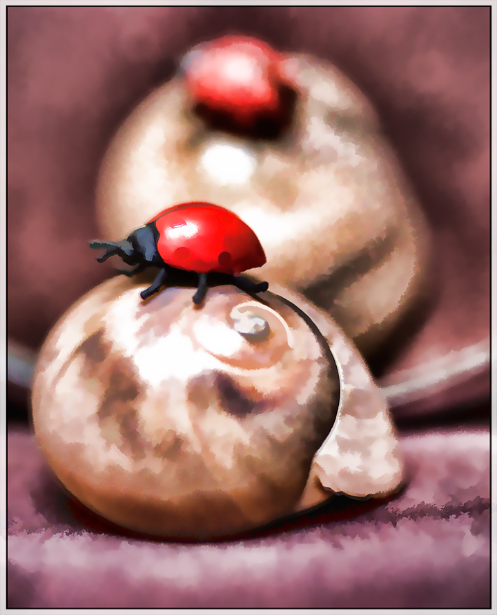 DSC_3591-ladybug-on-shell