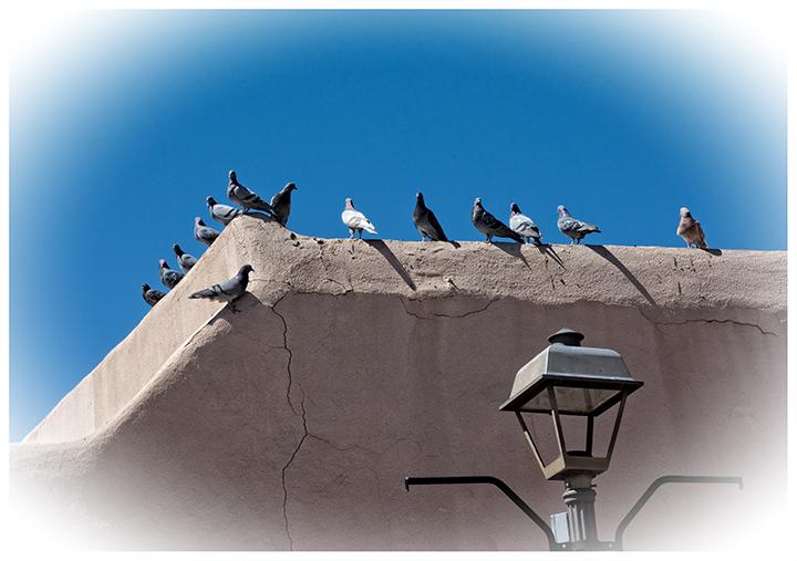 DSC_5880-perched-plaza-pigeons