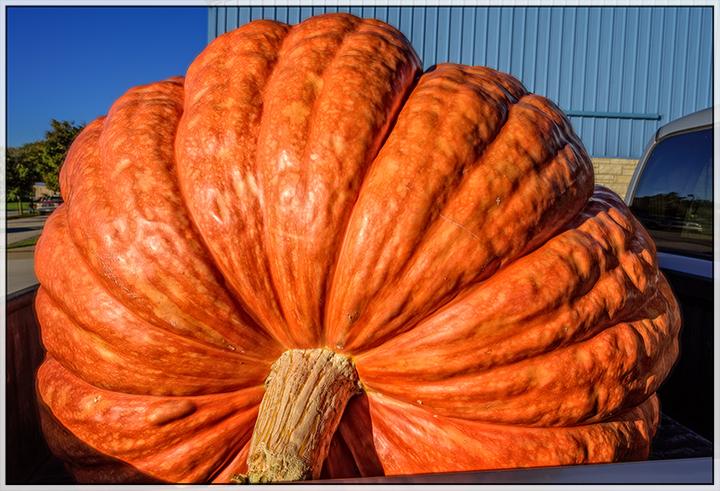 DSC_5663-serious-orange-pumpkin