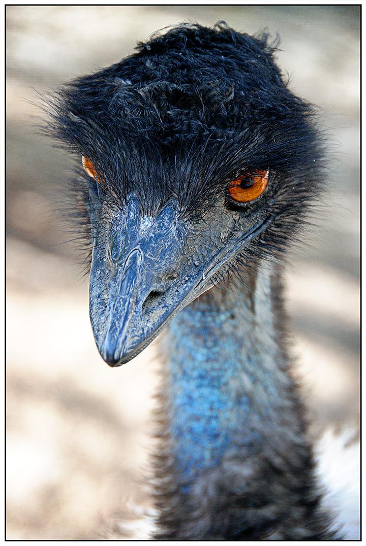 DSC_0558-zoo-emu-revived-8-2016